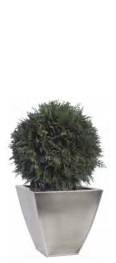 Green Thuja Base Topiary
