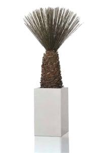 Agave Mash Reed Palm